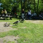дети одхыхают в парке скансен в стокгольме